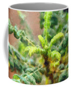 Frankincense Tree Leaves Coffee Mug