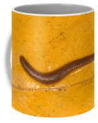 Freshwater Leech Hirudo Sp Coffee Mug