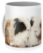 Frizzy Alpaca Guinea Pigs Coffee Mug