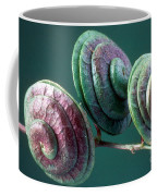 Fruits Of Wild Lucerne Coffee Mug by Nuridsany et Perennou and Photo Researchers