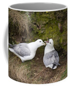 Fulmar Pair Bonding Coffee Mug
