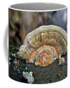 Fuzzy Turkey Tail Shelf Fungus - Trametes Ochracea Coffee Mug