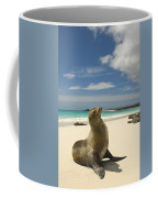 Galapagos Sea Lions Resting On A White Coffee Mug by Annie Griffiths