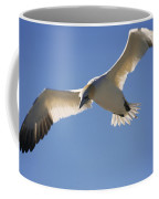 Gannet, Parc National De Coffee Mug