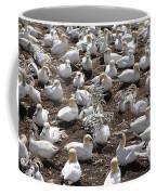 Gannets Showing Fencing Behavior Coffee Mug