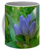 Gentiana Andrewsii - Bottle Gentian - Closed Gentian - Closed Bottle Gentian Coffee Mug