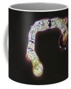 Germinating Fern Spores Coffee Mug