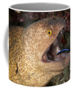 Giant Moray Eel And Cleaner Wrasse Coffee Mug