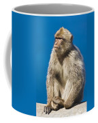 Gibraltar Barbary Macaque Macaca Coffee Mug