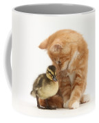 Ginger Kitten And Mallard Duckling Coffee Mug by Mark Taylor