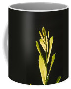Glorious Willow Aglow Coffee Mug