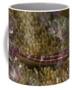 Goby On Coral, Australia Coffee Mug