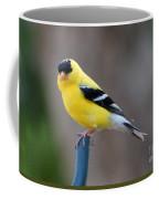 Gold Finch Coffee Mug