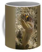 Gold-speck Jawfish Pouting, North Coffee Mug