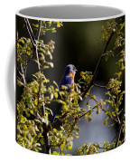 Good Morning Sunshine - Eastern Bluebird Coffee Mug