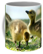 Goslings 6 Coffee Mug