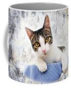 Grand Kitty Cuteness 2 Coffee Mug