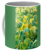 Grapevines In Azores Islands Coffee Mug