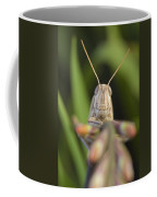 Gray Bird Grasshopper Schistocerca Coffee Mug