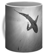 Gray Reef Shark, Kimbe Bay, Papua New Coffee Mug