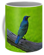 Greater Blue-eared Starling Coffee Mug