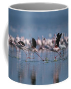 Greater Flamingos Run Through Shallow Coffee Mug