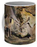 Greater Kudu Affection Coffee Mug