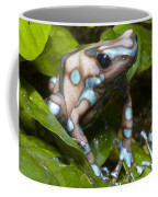 Green And Black Poison Frog Coffee Mug