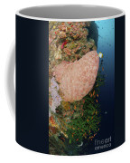 Green Coral With Red Fish And Pink Coffee Mug
