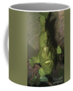 Green Frogfish In Sponge, North Coffee Mug by Mathieu Meur