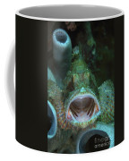 Green Grouper With Open Mouth, North Coffee Mug by Mathieu Meur