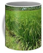 Green Rice Field In Taiwan Coffee Mug