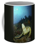 Green Turtle On Reef, Manado, North Coffee Mug