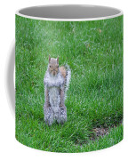 Grey Squirrel In The Rain II Coffee Mug