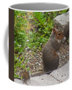 Grey Squirrel Coffee Mug