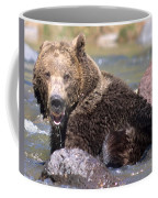 Grizzly Cavorts In Stream Coffee Mug