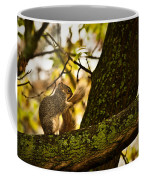 Grooming Grey Squirrel Coffee Mug
