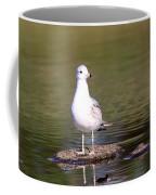 Gull - Don't Get Wet Feet Coffee Mug