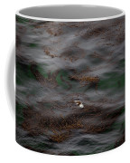 Harbor Seal In Kelp Bed Coffee Mug