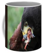 Harris Hawk Feeding Coffee Mug