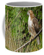 Hawk At A Wedding Coffee Mug