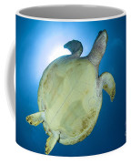Hawksbill Sea Turtle Belly, Australia Coffee Mug