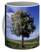 Hawthorn Tree On A Landscape, Ireland Coffee Mug