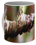Heart Pine Limb Coffee Mug
