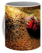 Hermit Crab On Coral Coffee Mug