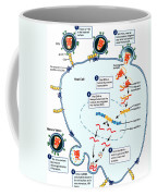 Hiv Virus Replication Cycle Coffee Mug by Science Source