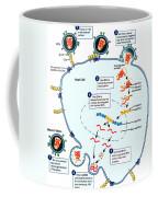 Hiv Virus Replication Cycle Coffee Mug