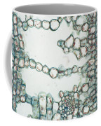Holly Leaf Palisade Cells Coffee Mug