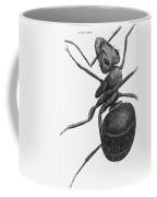 Hooke: Ant, 1665 Coffee Mug