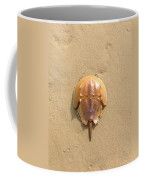 Horseshoe Crab In The Sand Campground Beach Cape Cod Eastham Ma Coffee Mug